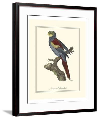 Nonpareil Parrakeet-George Edwards-Framed Art Print