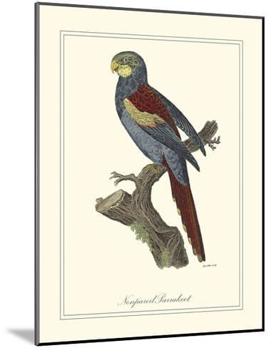 Nonpareil Parrakeet-George Edwards-Mounted Art Print