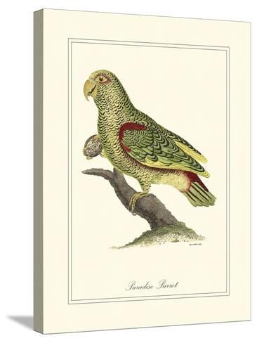 Paradise Parrot-George Edwards-Stretched Canvas Print