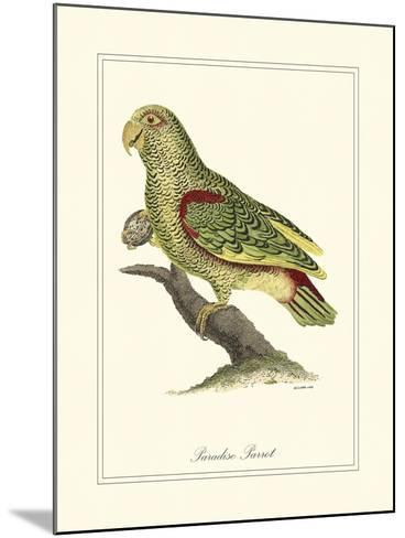 Paradise Parrot-George Edwards-Mounted Art Print