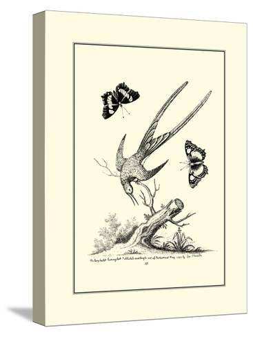 Longtailed Hummingbird , c.1742-George Edwards-Stretched Canvas Print