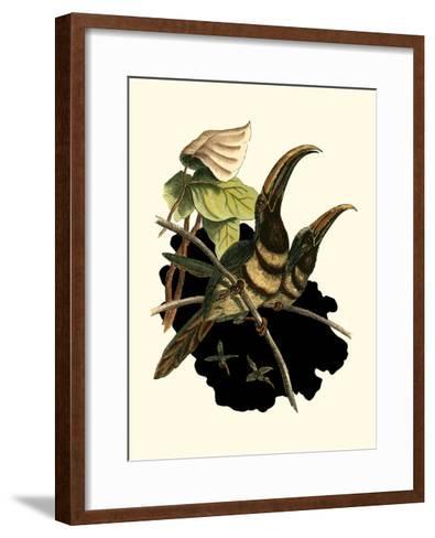 Many Banded Aracari-Vision Studio-Framed Art Print
