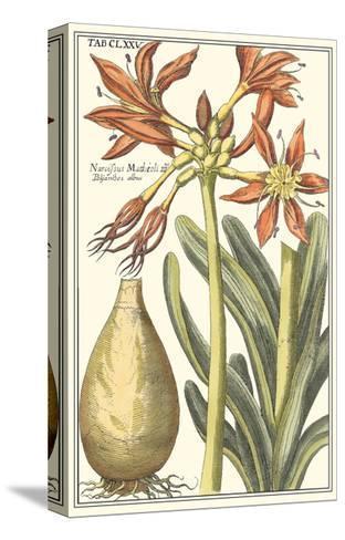Botanical Beauty III-Vision Studio-Stretched Canvas Print