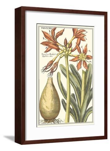 Botanical Beauty III-Vision Studio-Framed Art Print
