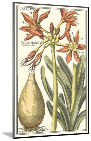 Botanical Beauty III-Vision Studio-Mounted Art Print