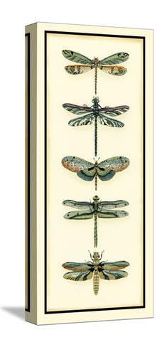 Dragonfly Collector II-Chariklia Zarris-Stretched Canvas Print