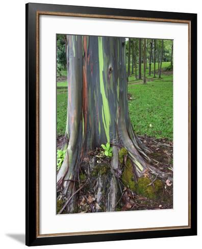 Eucalyptus Tree Bark, Kauai, Hawaii, USA-Dennis Flaherty-Framed Art Print