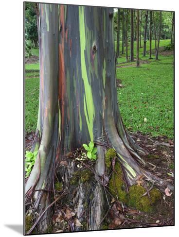 Eucalyptus Tree Bark, Kauai, Hawaii, USA-Dennis Flaherty-Mounted Photographic Print