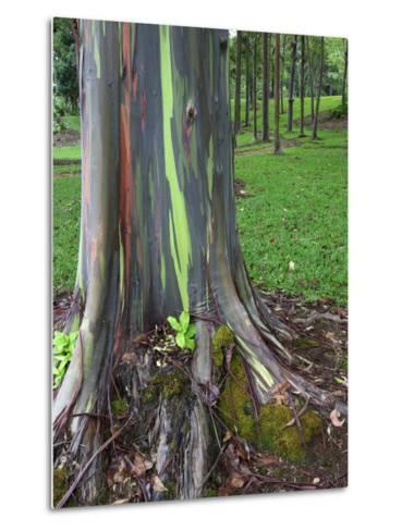 Eucalyptus Tree Bark, Kauai, Hawaii, USA-Dennis Flaherty-Metal Print