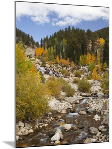 Alluvial Fan, Rocky Mountain National Park, Colorado, USA-Jamie & Judy Wild-Mounted Photographic Print