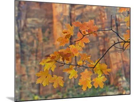 Zion National Park, Utah, USA-Cathy & Gordon Illg-Mounted Photographic Print