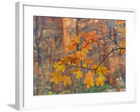 Zion National Park, Utah, USA-Cathy & Gordon Illg-Framed Art Print