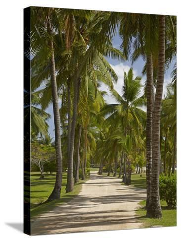 Avenue of Palms, Musket Cove Island Resort, Malolo Lailai Island, Mamanuca Islands, Fiji-David Wall-Stretched Canvas Print