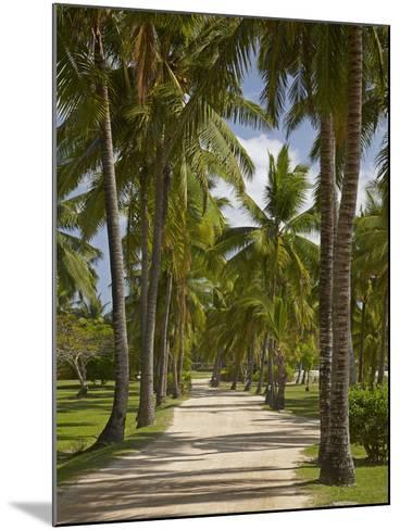 Avenue of Palms, Musket Cove Island Resort, Malolo Lailai Island, Mamanuca Islands, Fiji-David Wall-Mounted Photographic Print