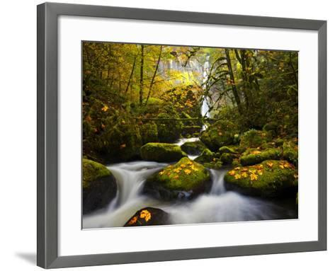 A Rushing Mccord Creek with Yellow Fall Color from Bigleaf Maple, Columbia Gorge, Oregon, USA-Gary Luhm-Framed Art Print