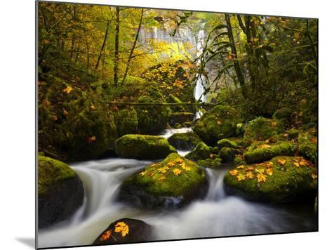 A Rushing Mccord Creek with Yellow Fall Color from Bigleaf Maple, Columbia Gorge, Oregon, USA-Gary Luhm-Mounted Photographic Print
