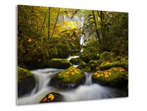 A Rushing Mccord Creek with Yellow Fall Color from Bigleaf Maple, Columbia Gorge, Oregon, USA-Gary Luhm-Metal Print