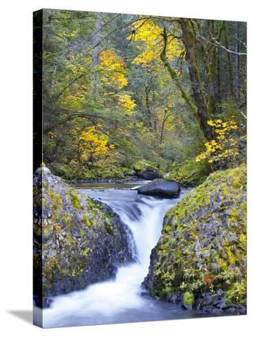 A Fall Color Scene on Eagle Creek in the Columbia Gorge, Oregon, USA-Gary Luhm-Stretched Canvas Print