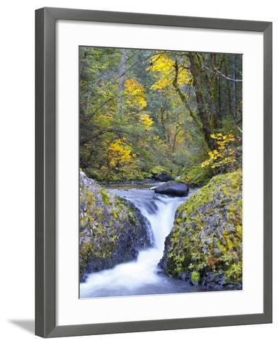 A Fall Color Scene on Eagle Creek in the Columbia Gorge, Oregon, USA-Gary Luhm-Framed Art Print