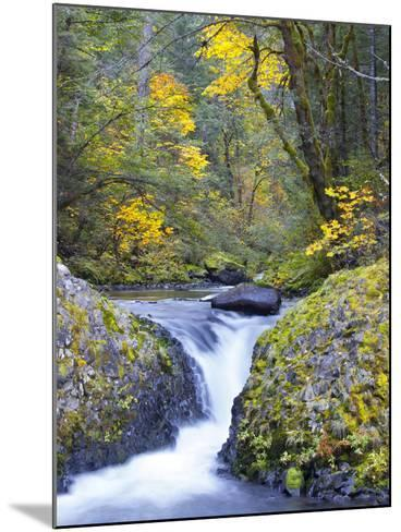 A Fall Color Scene on Eagle Creek in the Columbia Gorge, Oregon, USA-Gary Luhm-Mounted Photographic Print