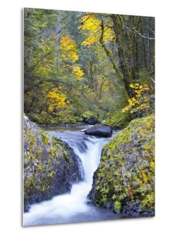A Fall Color Scene on Eagle Creek in the Columbia Gorge, Oregon, USA-Gary Luhm-Metal Print