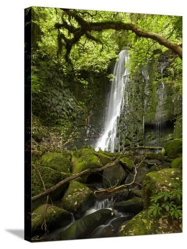 Matai Falls, Catlins, South Otago, South Island, New Zealand-David Wall-Stretched Canvas Print