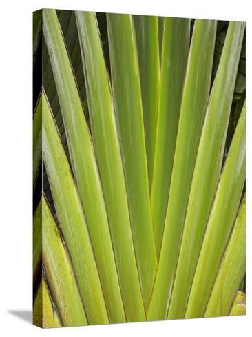 Palm Frond Pattern, Coral Coast, Viti Levu, Fiji, South Pacific-David Wall-Stretched Canvas Print