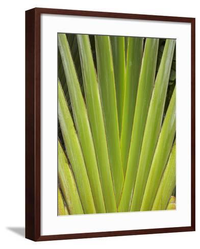 Palm Frond Pattern, Coral Coast, Viti Levu, Fiji, South Pacific-David Wall-Framed Art Print