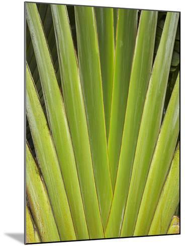 Palm Frond Pattern, Coral Coast, Viti Levu, Fiji, South Pacific-David Wall-Mounted Photographic Print