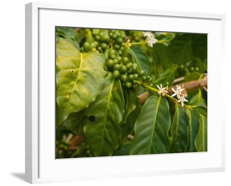 Greenwell Kona Coffee Farm, Big Island, Hawaii, USA-Inger Hogstrom-Framed Art Print