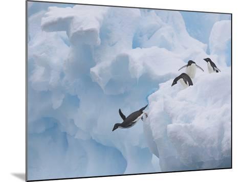 Adelie Penguins, Paulet Island, Antartica, Antarctic-Hugh Rose-Mounted Photographic Print