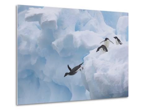 Adelie Penguins, Paulet Island, Antartica, Antarctic-Hugh Rose-Metal Print