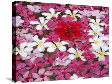 Flower Decoration, Udaipur, Rajasthan, India-Keren Su-Stretched Canvas Print