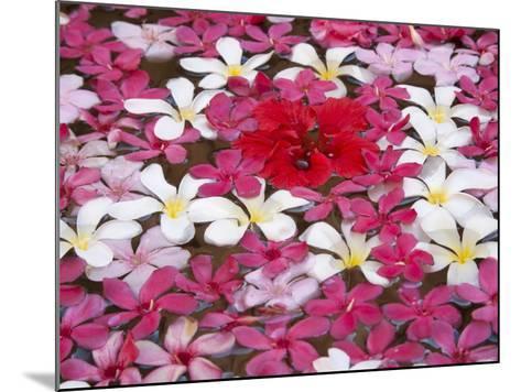 Flower Decoration, Udaipur, Rajasthan, India-Keren Su-Mounted Photographic Print