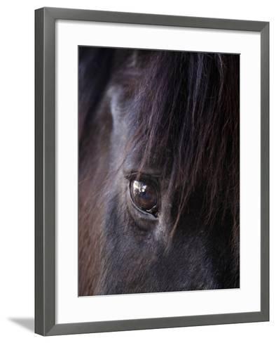 White Stallion Dude Ranch, Tucson, Arizona, USA-Julian McRoberts-Framed Art Print