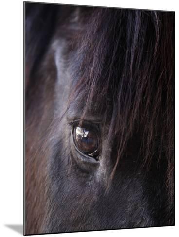White Stallion Dude Ranch, Tucson, Arizona, USA-Julian McRoberts-Mounted Photographic Print