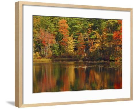 Autumn Reflections, Trickey Pond, Naples, Maine, USA-Michel Hersen-Framed Art Print