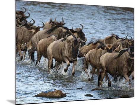 White-Bearded Wildebeest, Masai Mara Game Reserve, Kenya-Joe & Mary Ann McDonald-Mounted Photographic Print