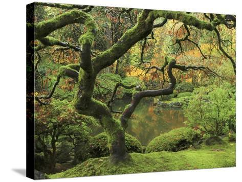 Portland Japanese Garden in Early Autumn: Portland Japanese Garden, Portland, Oregon, USA-Michel Hersen-Stretched Canvas Print