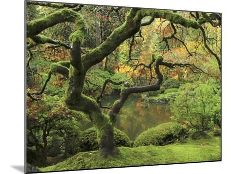 Portland Japanese Garden in Early Autumn: Portland Japanese Garden, Portland, Oregon, USA-Michel Hersen-Mounted Photographic Print