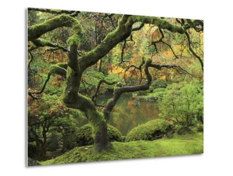 Portland Japanese Garden in Early Autumn: Portland Japanese Garden, Portland, Oregon, USA-Michel Hersen-Metal Print