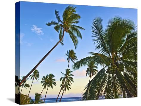 Nanuku Levu, Fiji Islands Palm Trees with Coconuts, Fiji, South Pacific, Oceania-Miva Stock-Stretched Canvas Print
