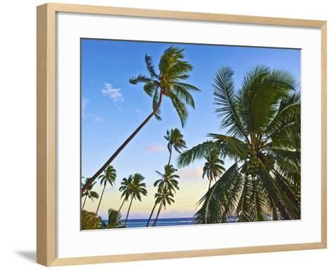 Nanuku Levu, Fiji Islands Palm Trees with Coconuts, Fiji, South Pacific, Oceania-Miva Stock-Framed Art Print