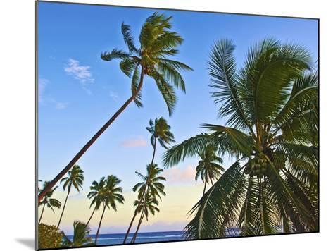 Nanuku Levu, Fiji Islands Palm Trees with Coconuts, Fiji, South Pacific, Oceania-Miva Stock-Mounted Photographic Print