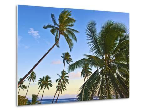 Nanuku Levu, Fiji Islands Palm Trees with Coconuts, Fiji, South Pacific, Oceania-Miva Stock-Metal Print