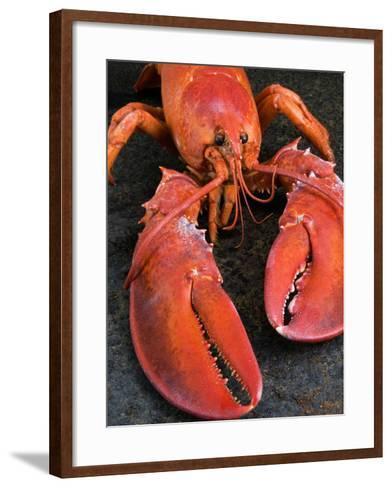 Lobster (Homarus Americanus)-Nico Tondini-Framed Art Print