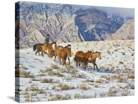 Horse Drive, Shell, Wyoming, USA-Terry Eggers-Stretched Canvas Print