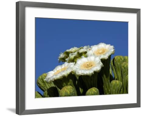Saguaro Cactus, Saguaro National Park, Tucson, Arizona, USA-Peter Hawkins-Framed Art Print