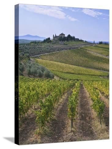 Vineyard, Chianti, Italy-Rob Tilley-Stretched Canvas Print
