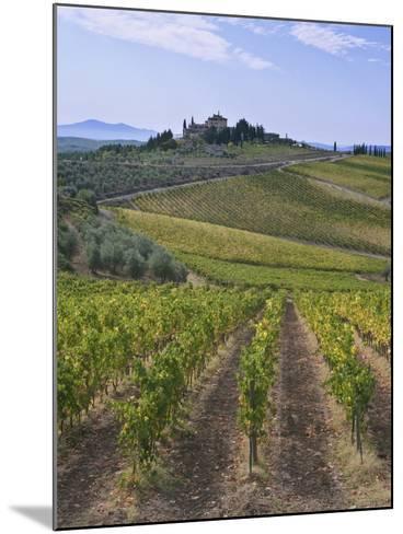 Vineyard, Chianti, Italy-Rob Tilley-Mounted Photographic Print